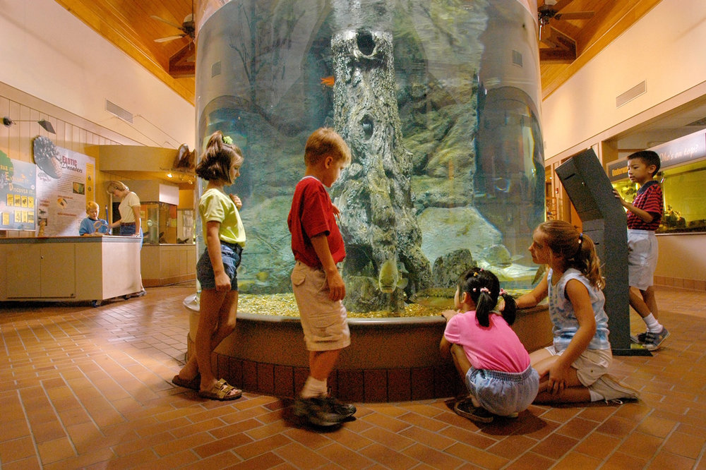 Taking a camping trip at a state park adds interesting amenities such as visitor center displays and interpreter presentations.