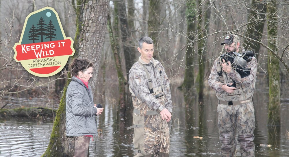 Game and Fish personnel inspect a greentree reservoir.