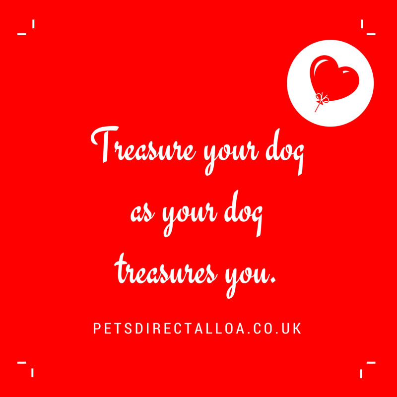 treasure-your-dog-pet-shop-alloa-falkirk-stirling.jpg