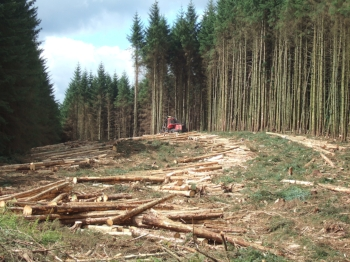 Timber_harvesting_in_Kielder_Forest for Better Land use post.JPG