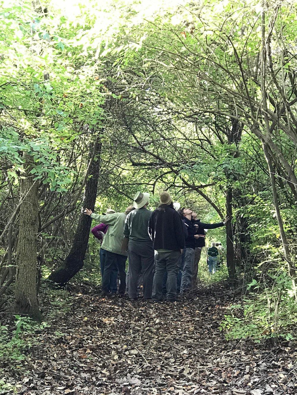 Tree identification walk-2 smaller.jpg