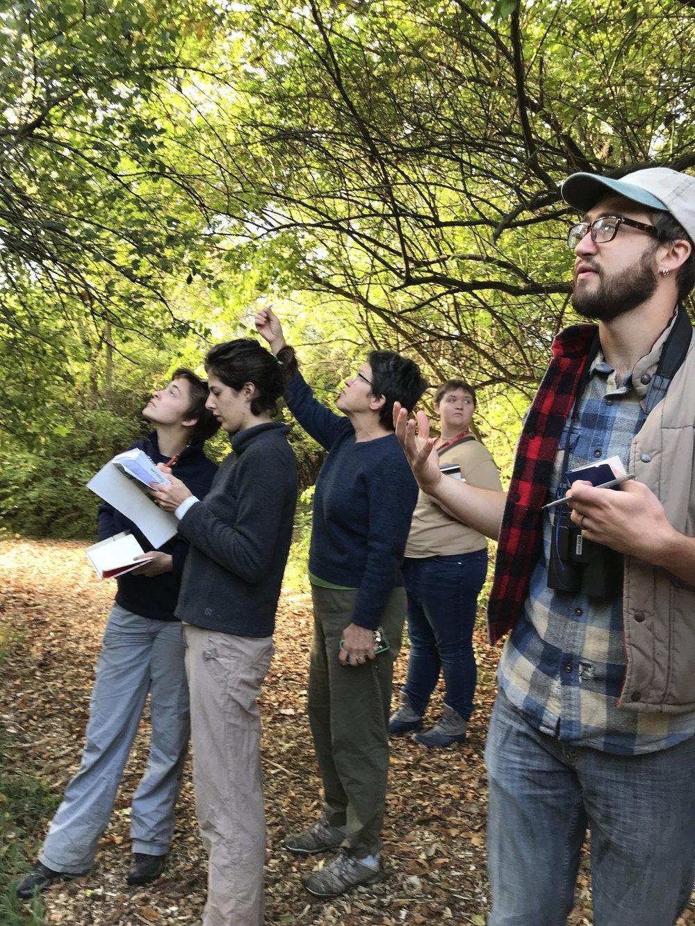 Tree identification walk-4 smaller.jpg