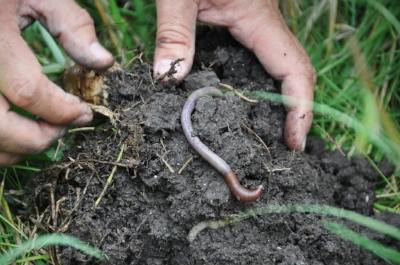 Hands with earthworm.jpg