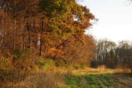 Agraria late fall-view from field 5 smaller.jpg