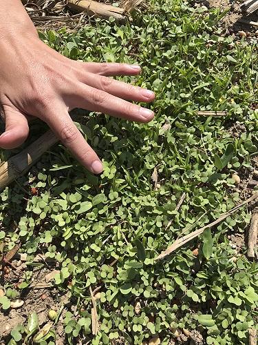 cover_crop_Julia_hand smaller.jpg