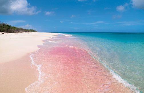 pink sand barbuda.jpg