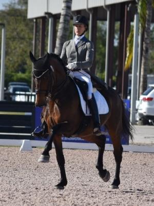 Bianca Tota Excelsior Dressage INC 203-252-8531