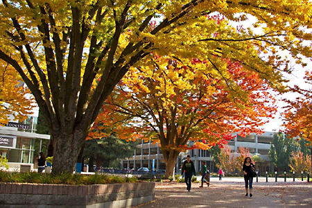Fall at Sac State is the best. #Cityoftrees