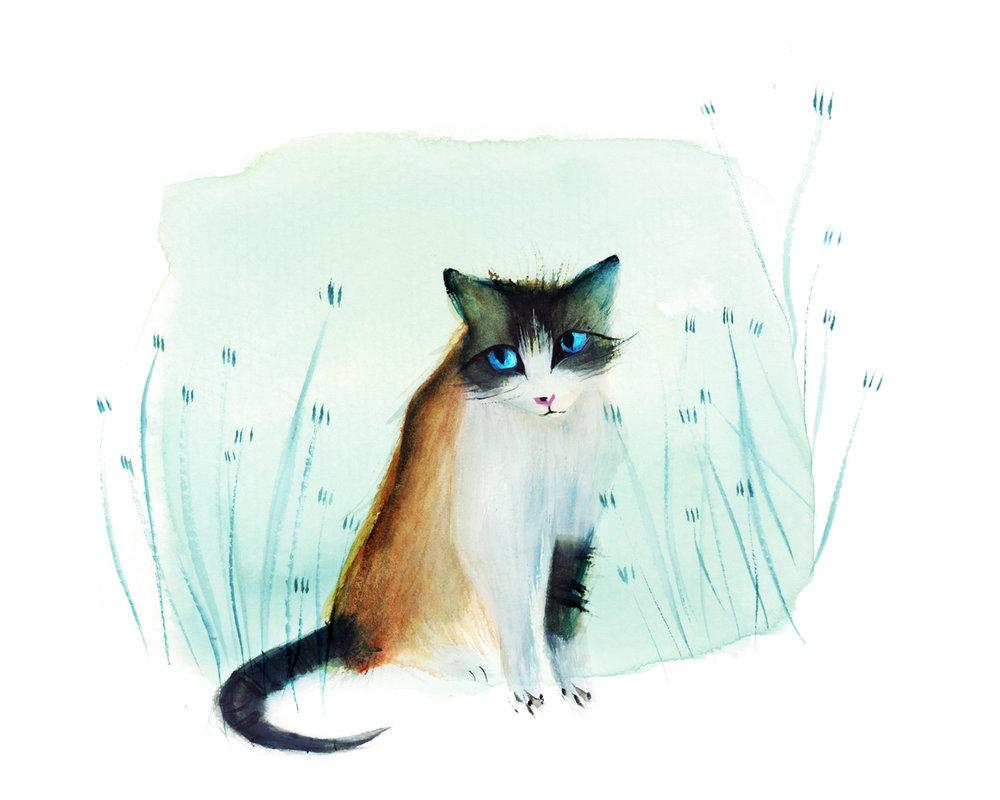 Cat_pet.jpg