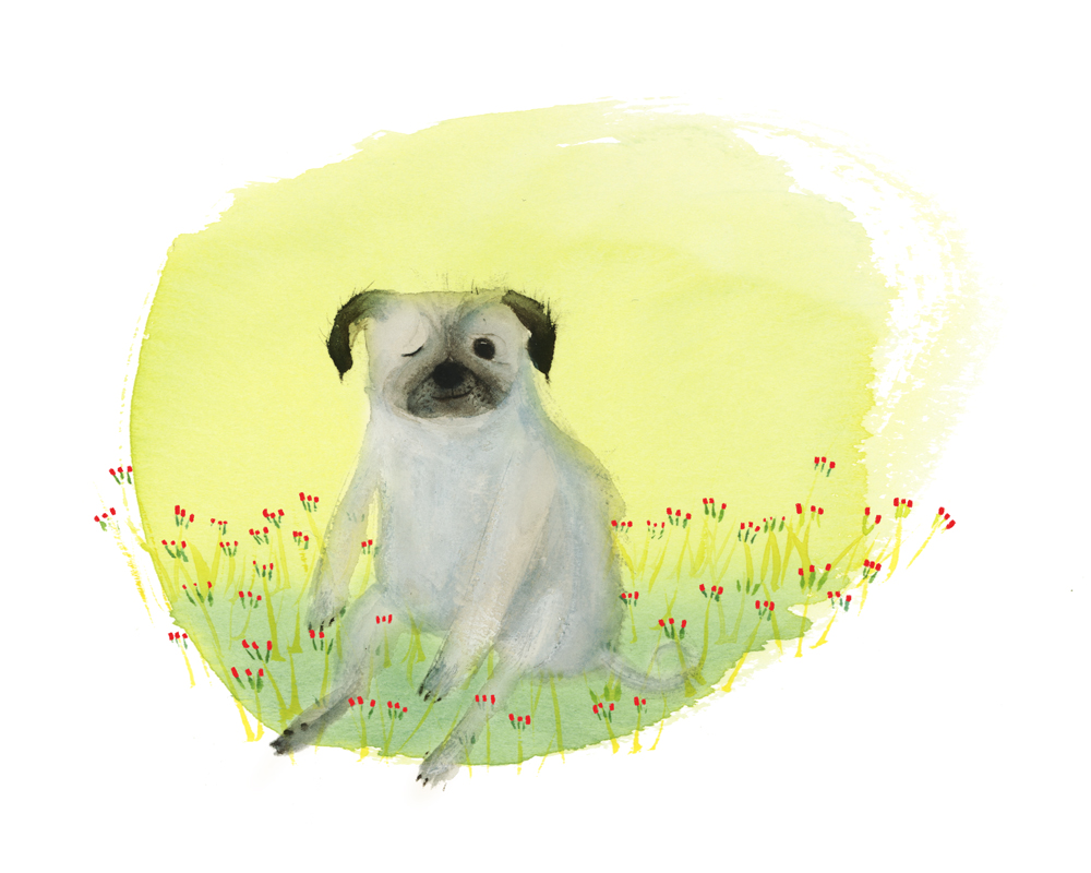 PetPortrait_Pug_Cindy_Derby.jpg