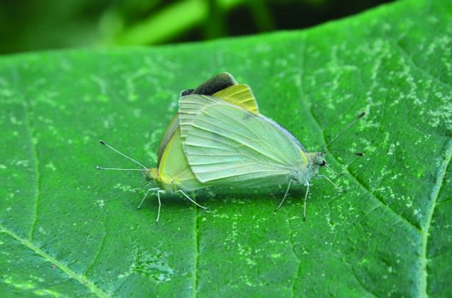 LCG 2012 bugs on green leaf.jpg