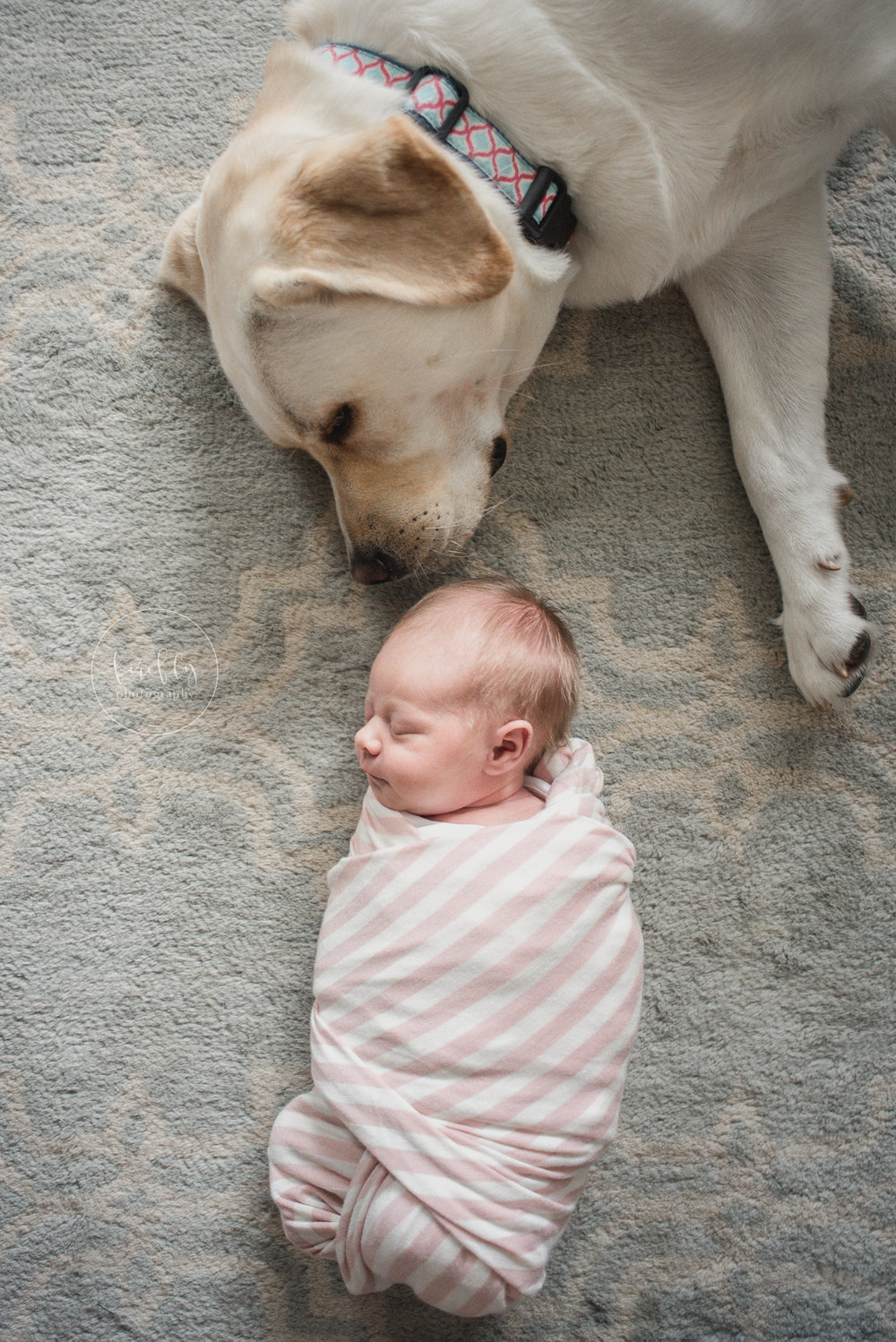 newborn-with-dog-photoshoot-lifestyle
