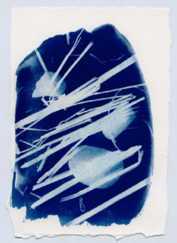 Cyanotypes by  Sara Alonso-Martínez: