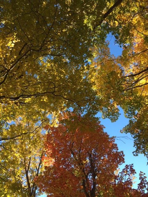 Multicolor Canopy, Nobody's Road
