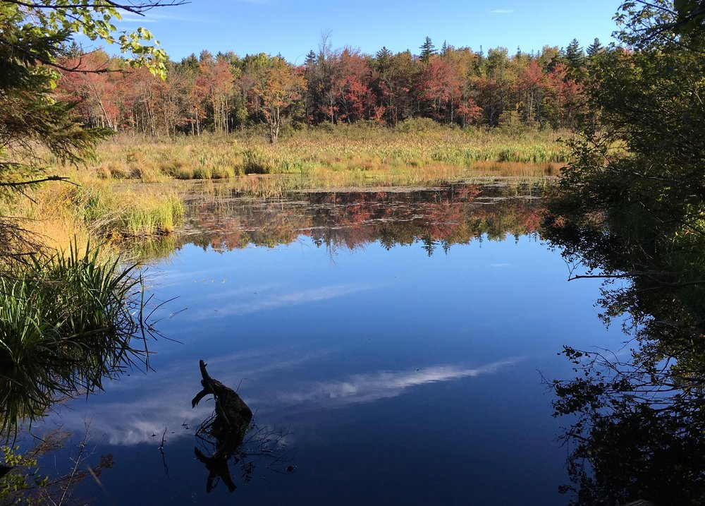 Beaver Pond, off Flintstone Rd.