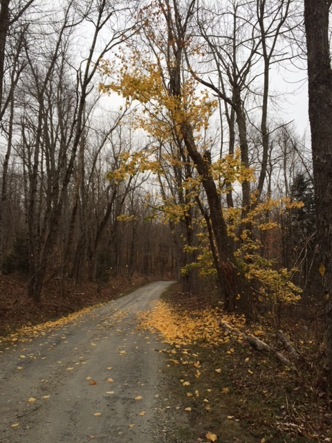 Peru Rd, Last of the Leaves