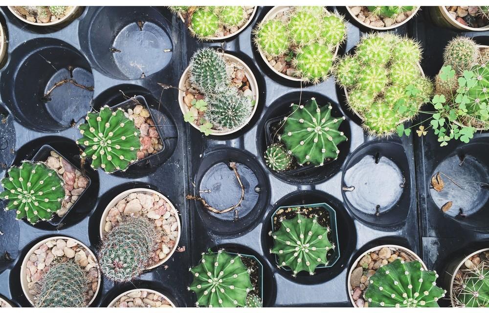 succulents-11-e1410376790484.jpg