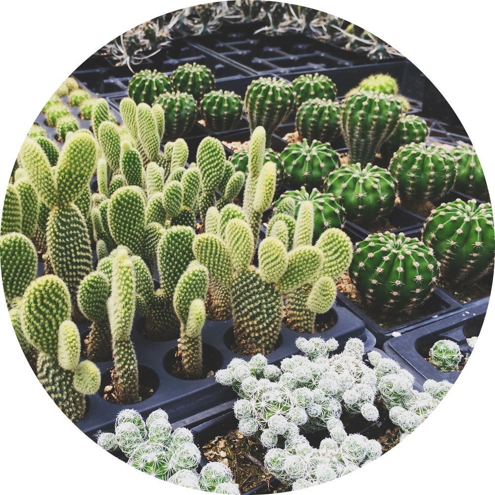 succulents-3.jpg