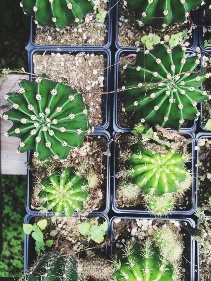 Spikysucculent