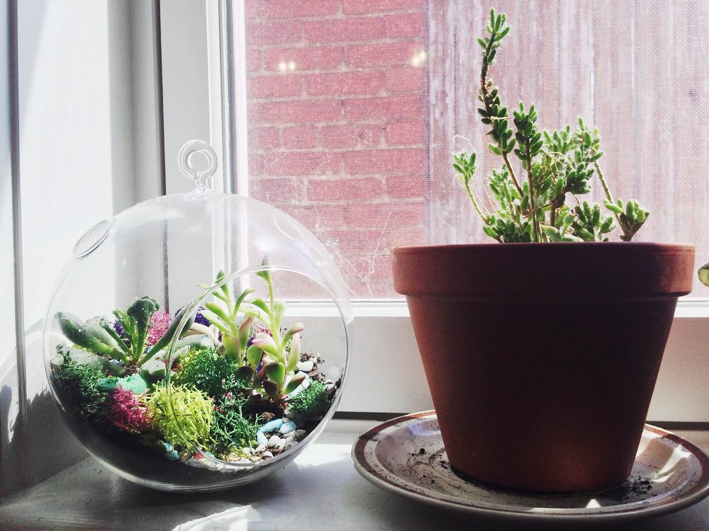 windowsillplants