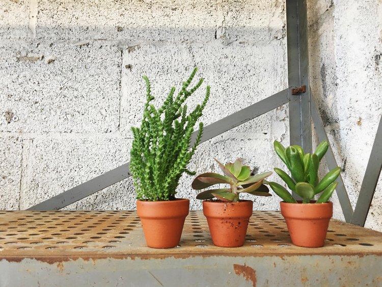 tinyterracottasucculents