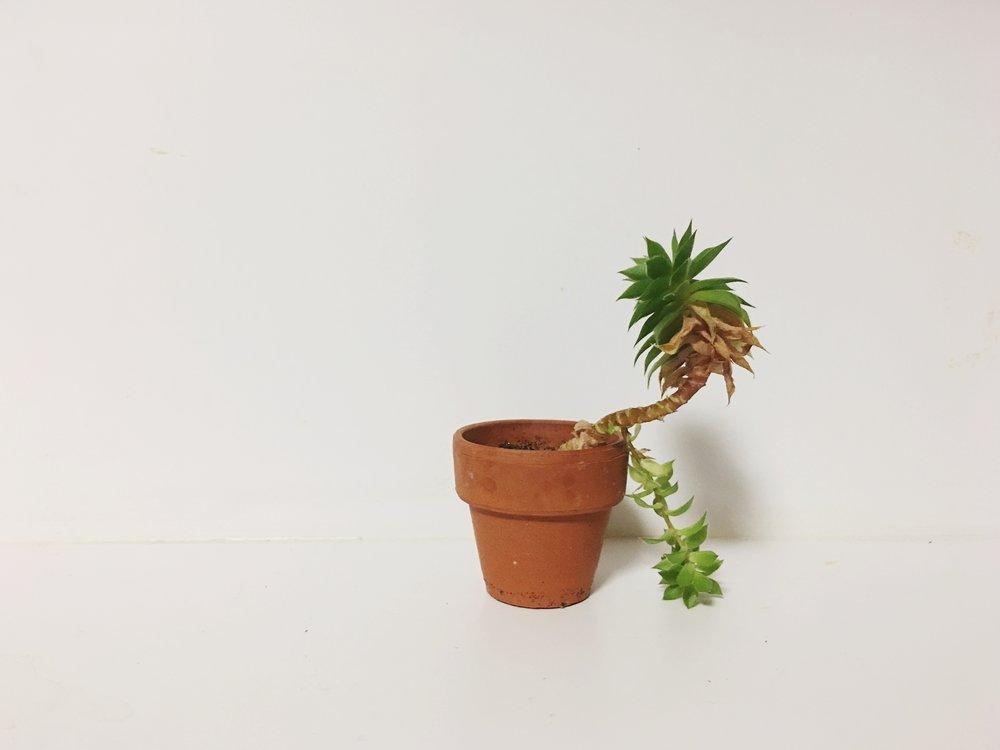 talltinysucculent