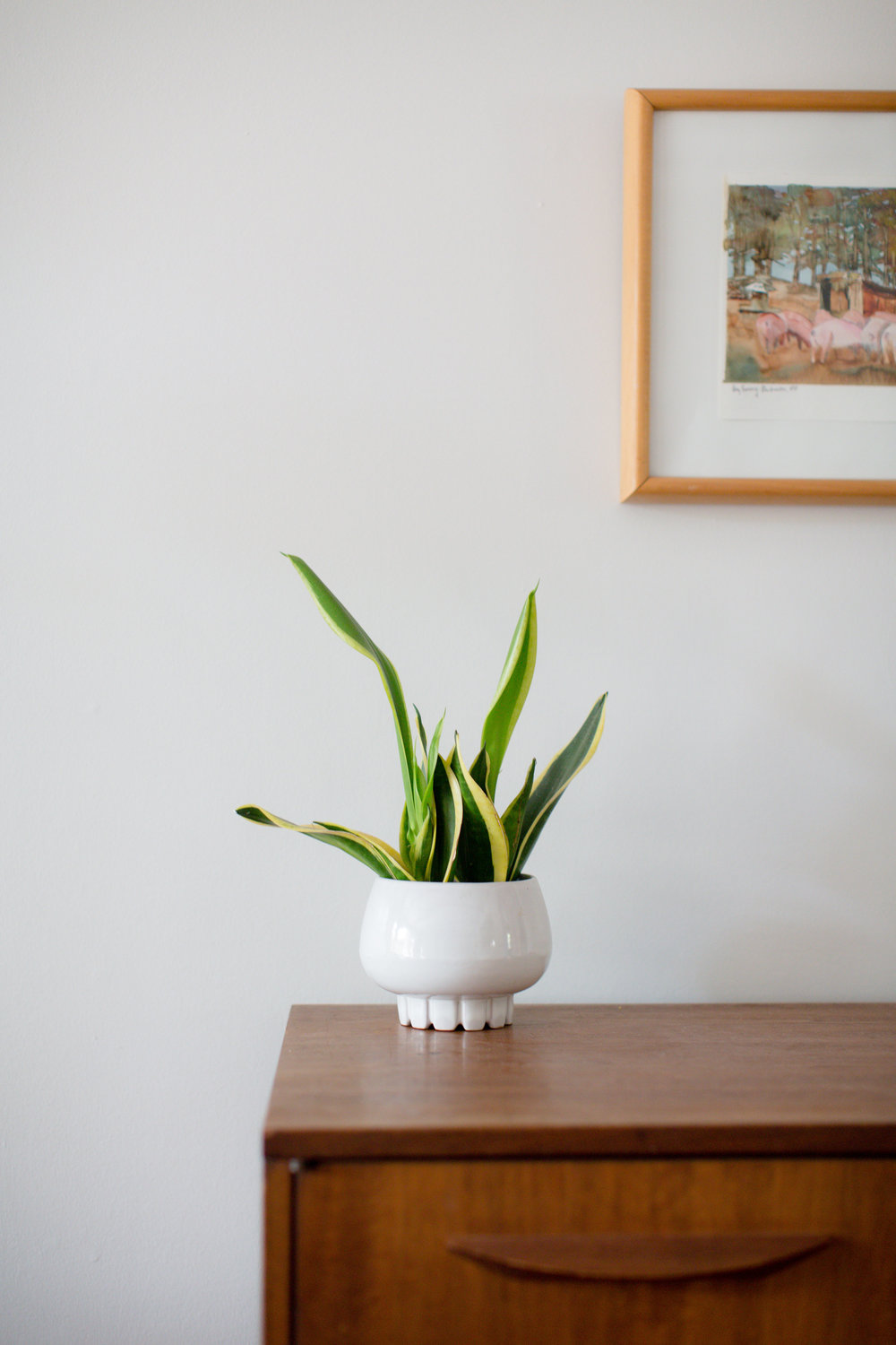 Snake plant potted in Frankoma planter in Palmer's home // Photo credit: KET Photography