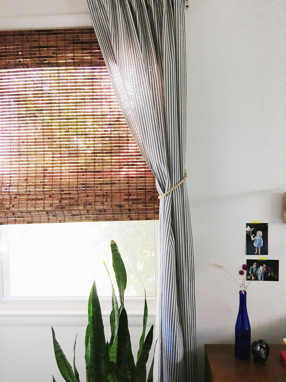 bedroom window + snake plant