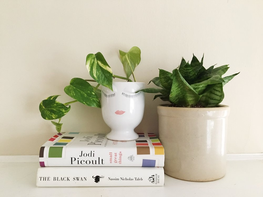 We suggested easy-to-care-for house plants for Jessica because she leads a busy life, but still wants the beauty of plants in her home.