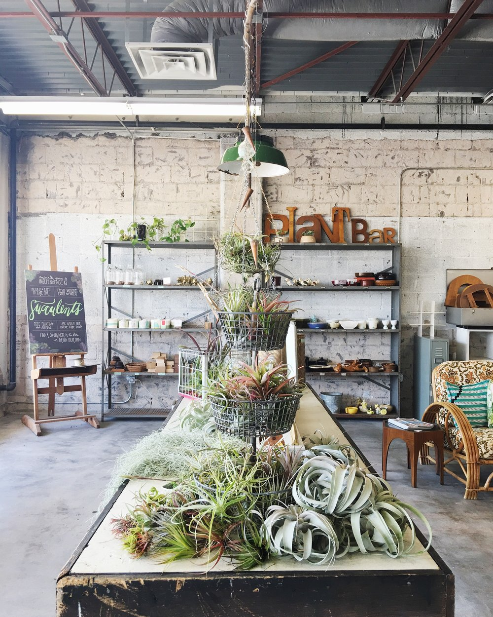 Our Favorite Ways To Display Air Plants Retro Den Vintage