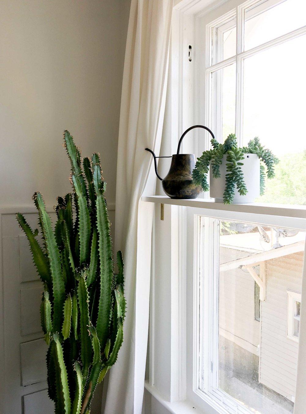 cactus-home-decor