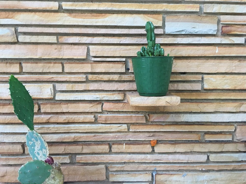 patio succulents + cacti