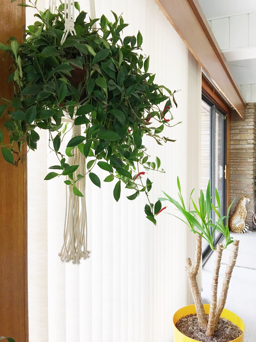 This pretty hanging plant seems to thrive in the south facing window.