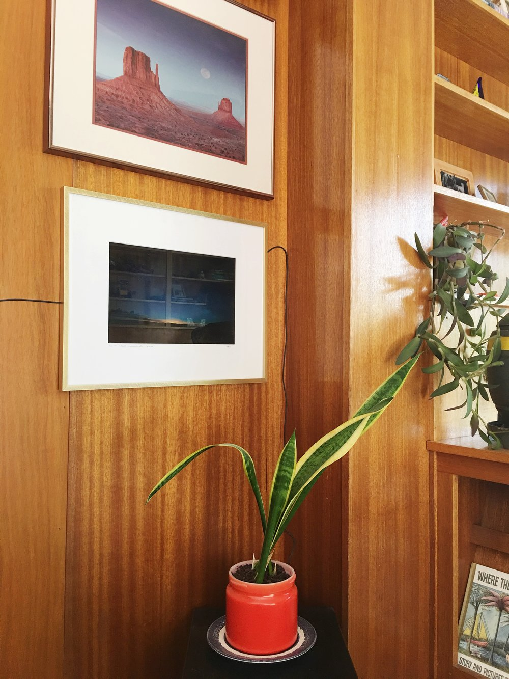 A little snake plant in a competition orange pot underneath a desert photograph my father-in-law took. Note the wire on the wall. Maybe we'll work on that one day. ;)