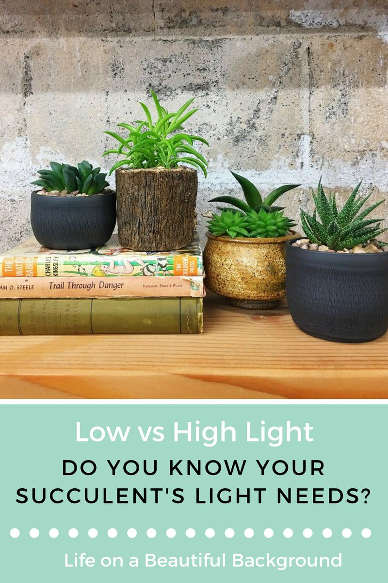 Tulsa House Plants & Succulent Care Guide: High vs Low Light Succulents u2014 Retro Den azcodes.com