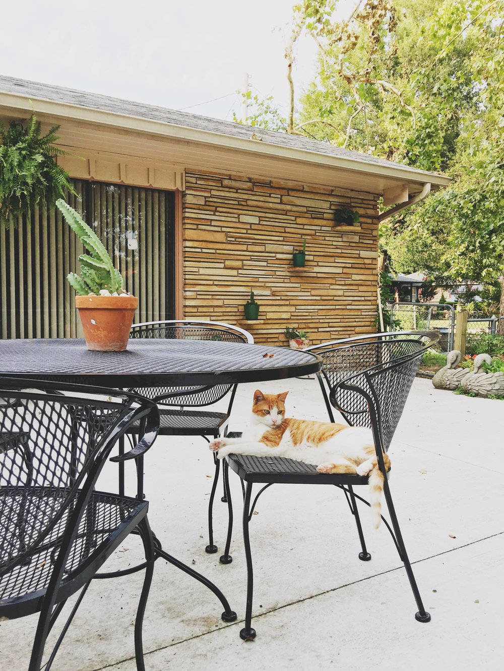We were super pumped that Palmer's patio was  featured on Apartment Therapy  this week. Palmer intentionally matches her design color schemes to her pet's fur colors. The patio was inspired by Siggy.