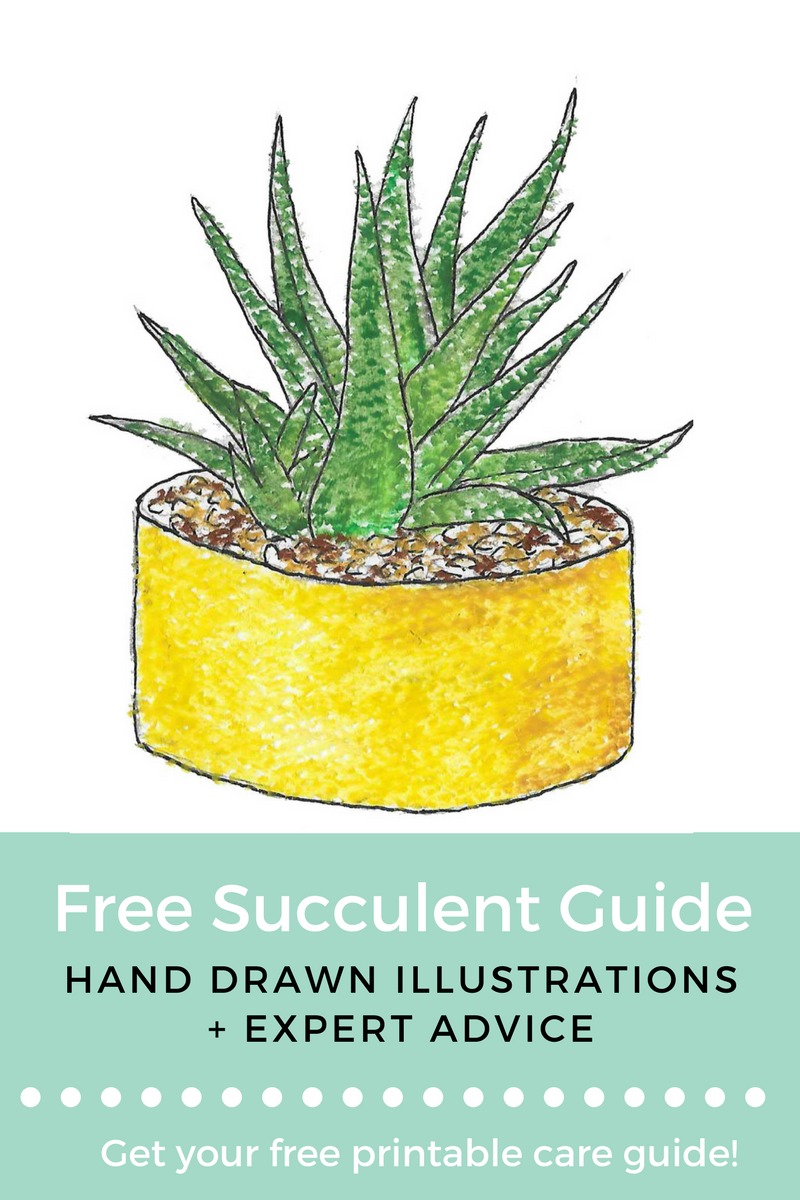 Free Succulent Guide.png
