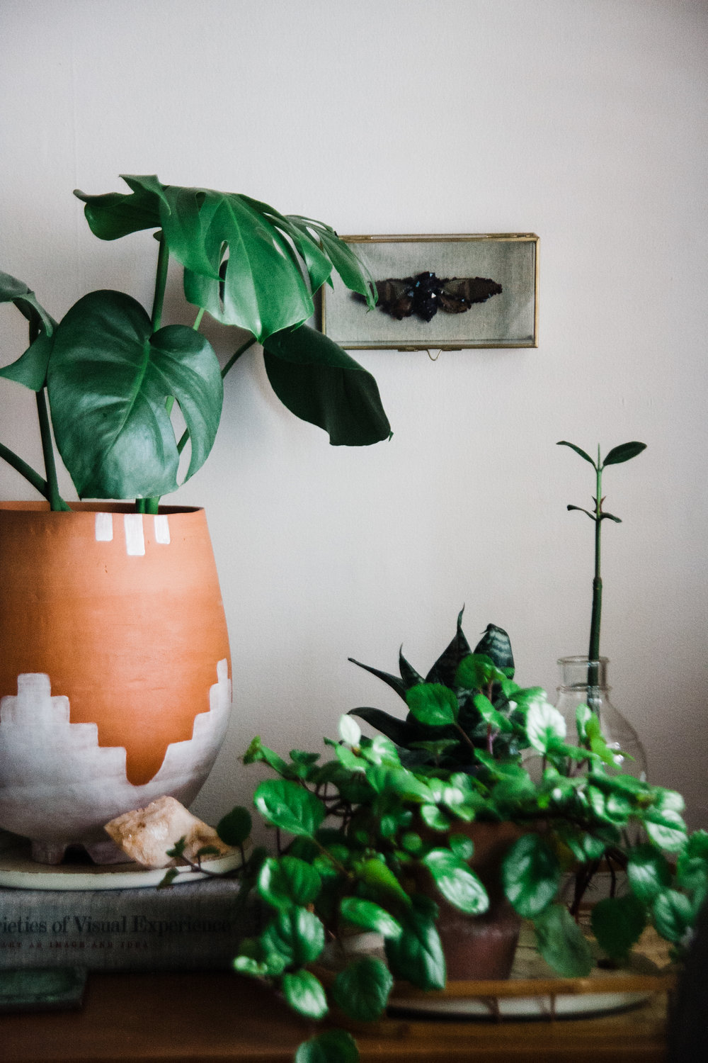 The Midwest winter is cold, but having the plants inside makes homes feel warm and cozy.