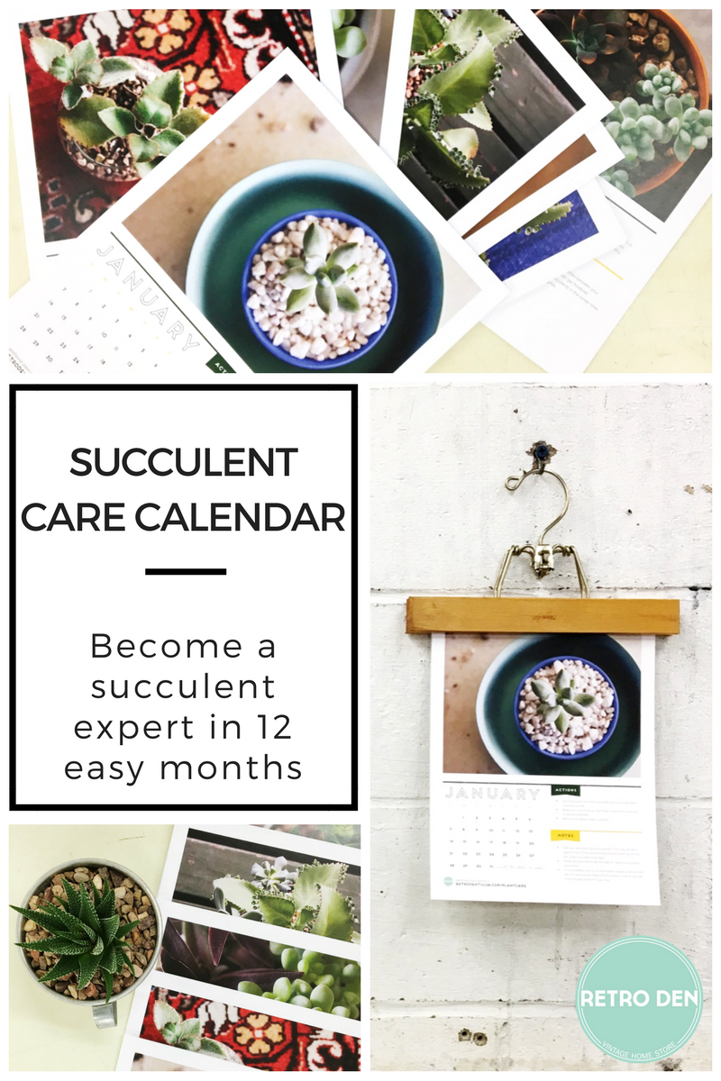 care calendar for succulents