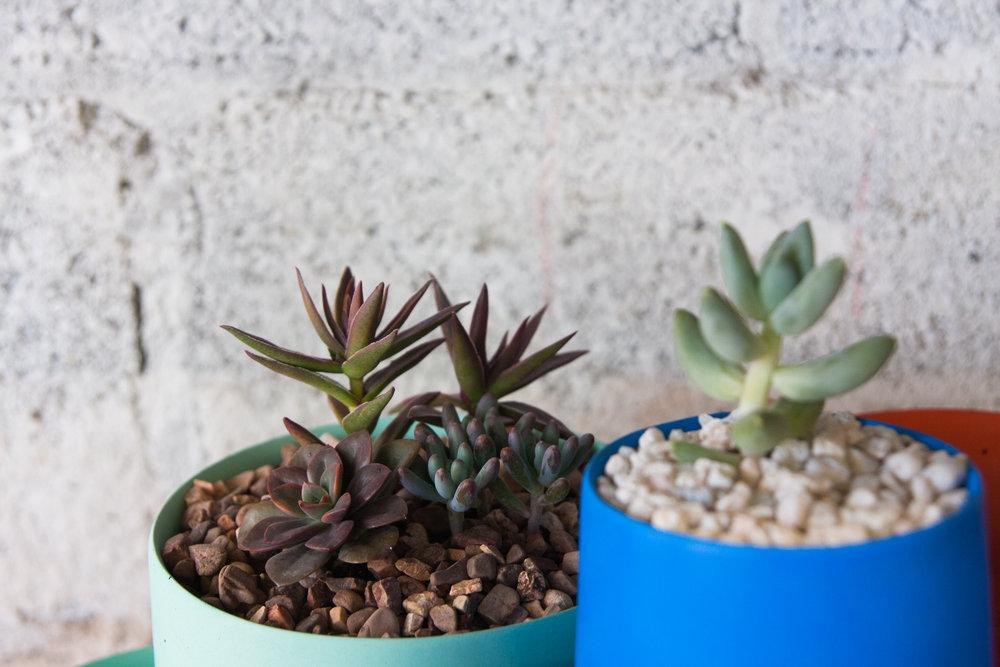 makerage planters