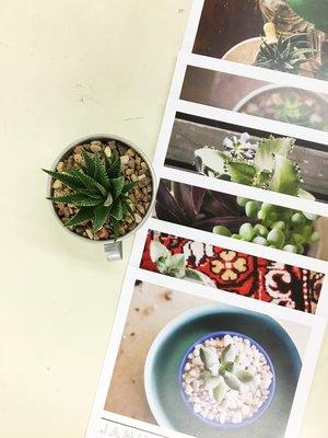 Succulent+Care+Calendar