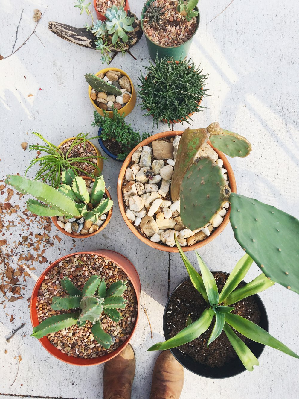 Palmer moved all of her succulents outside for their monthly watering! Want to not think about when you need to water your succulents? Get our  2018 Succulent Care Calendar  and let us teach you!