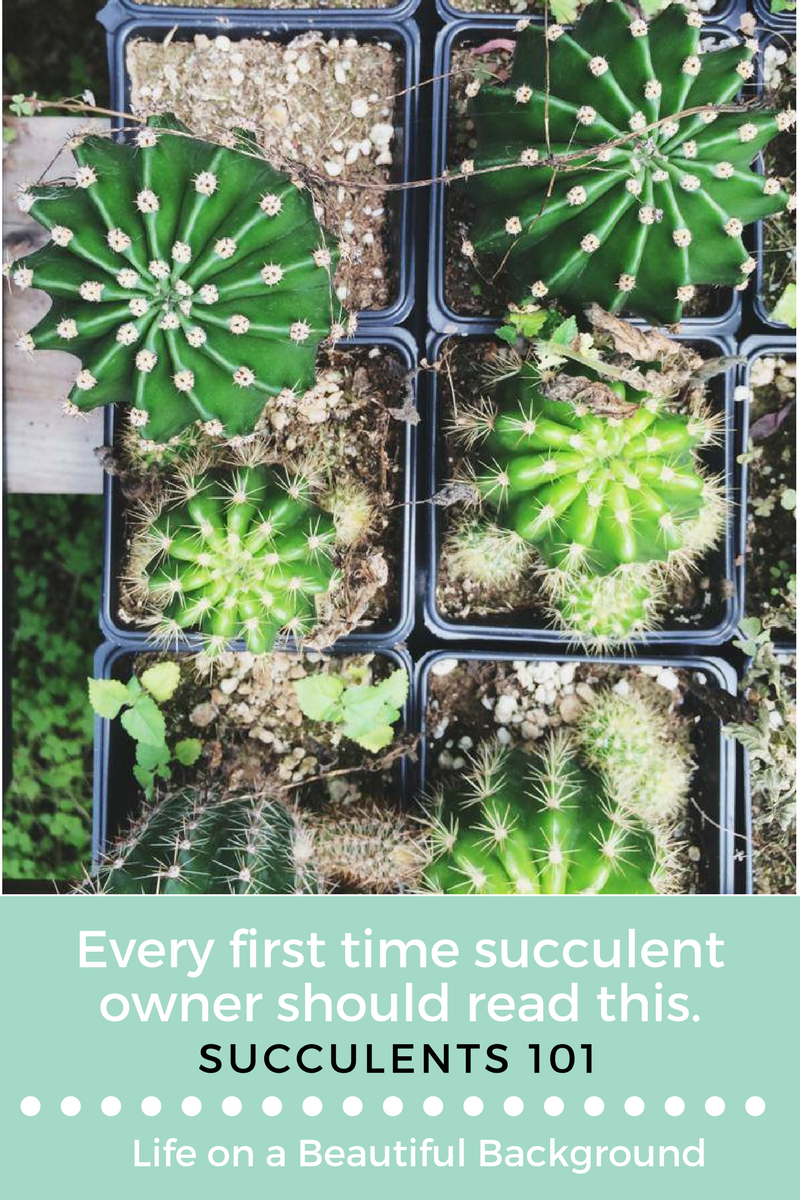 Succulent Care 101.png