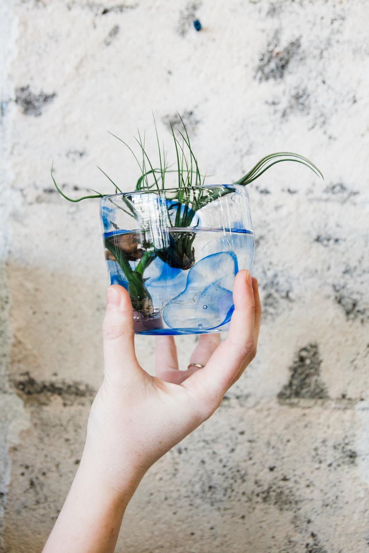 airplants-blog-4.jpg