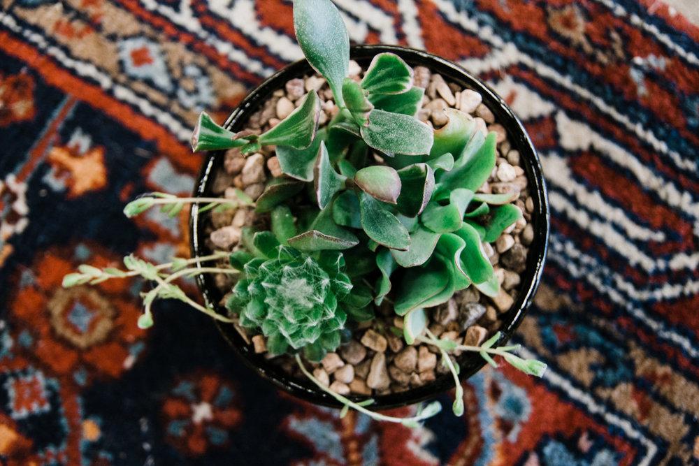 foxy-succulent-class-13.jpg
