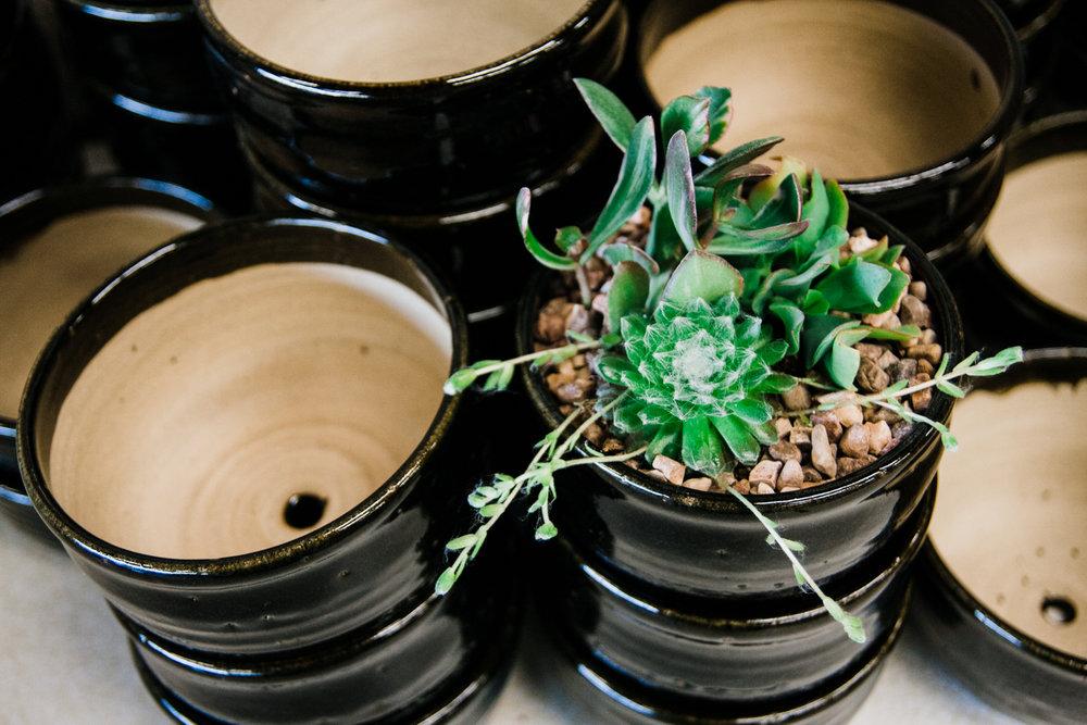foxy-succulent-class-8.jpg