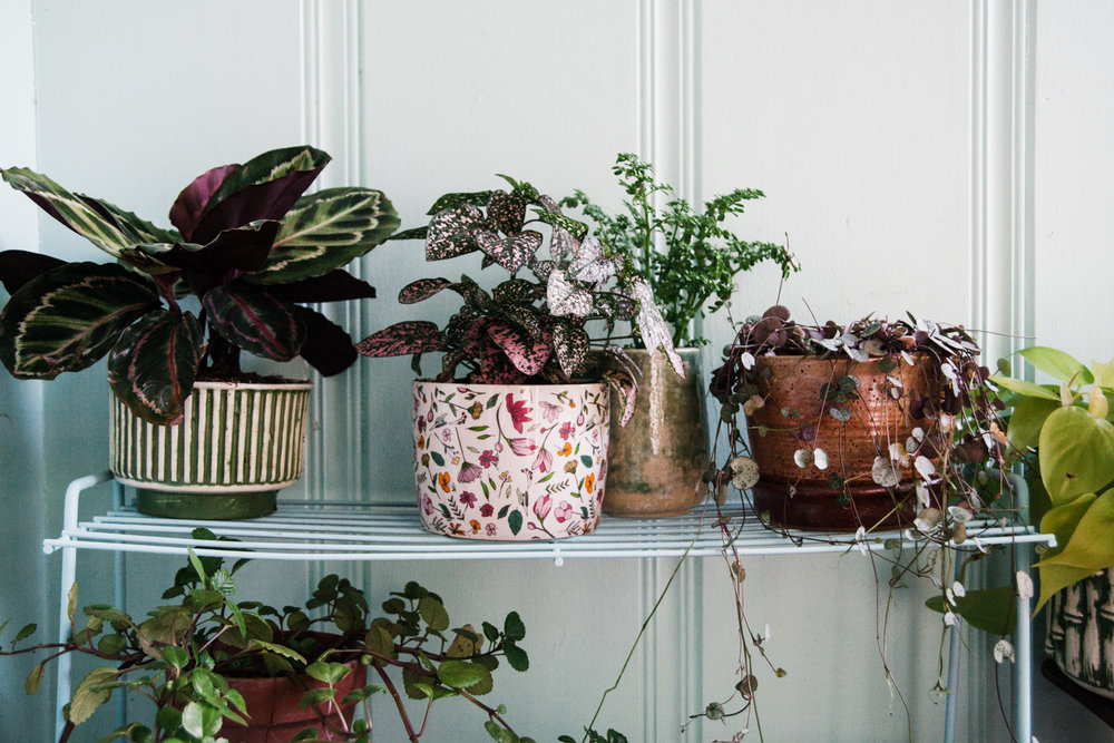 planting-house-plants