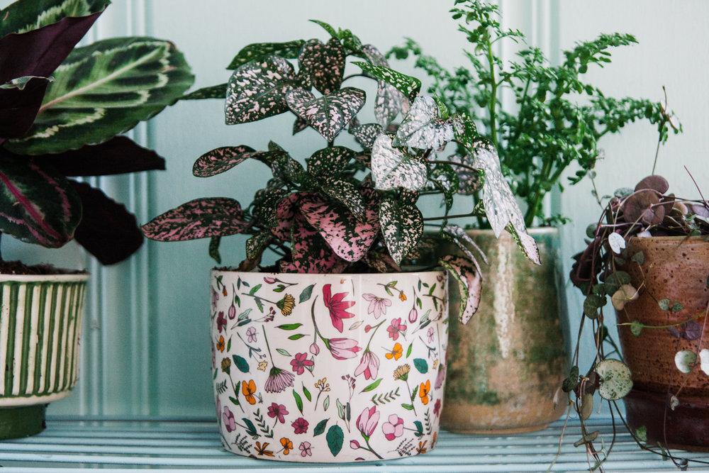 house-plants-potting-station