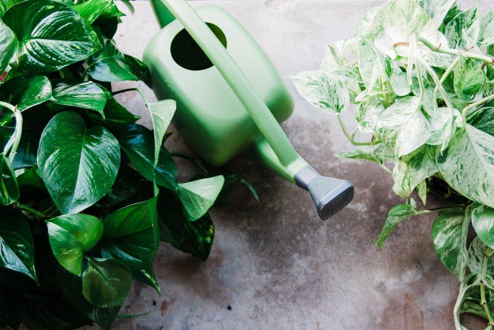 planting-at-home