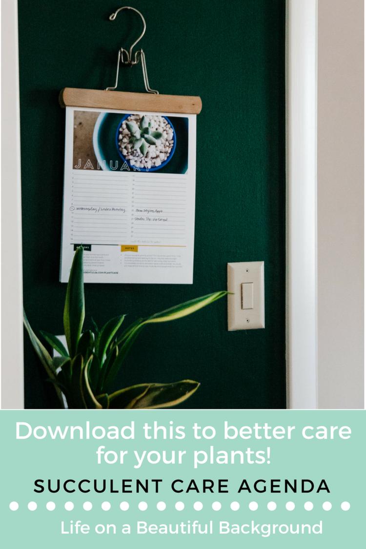 succulent care agenda